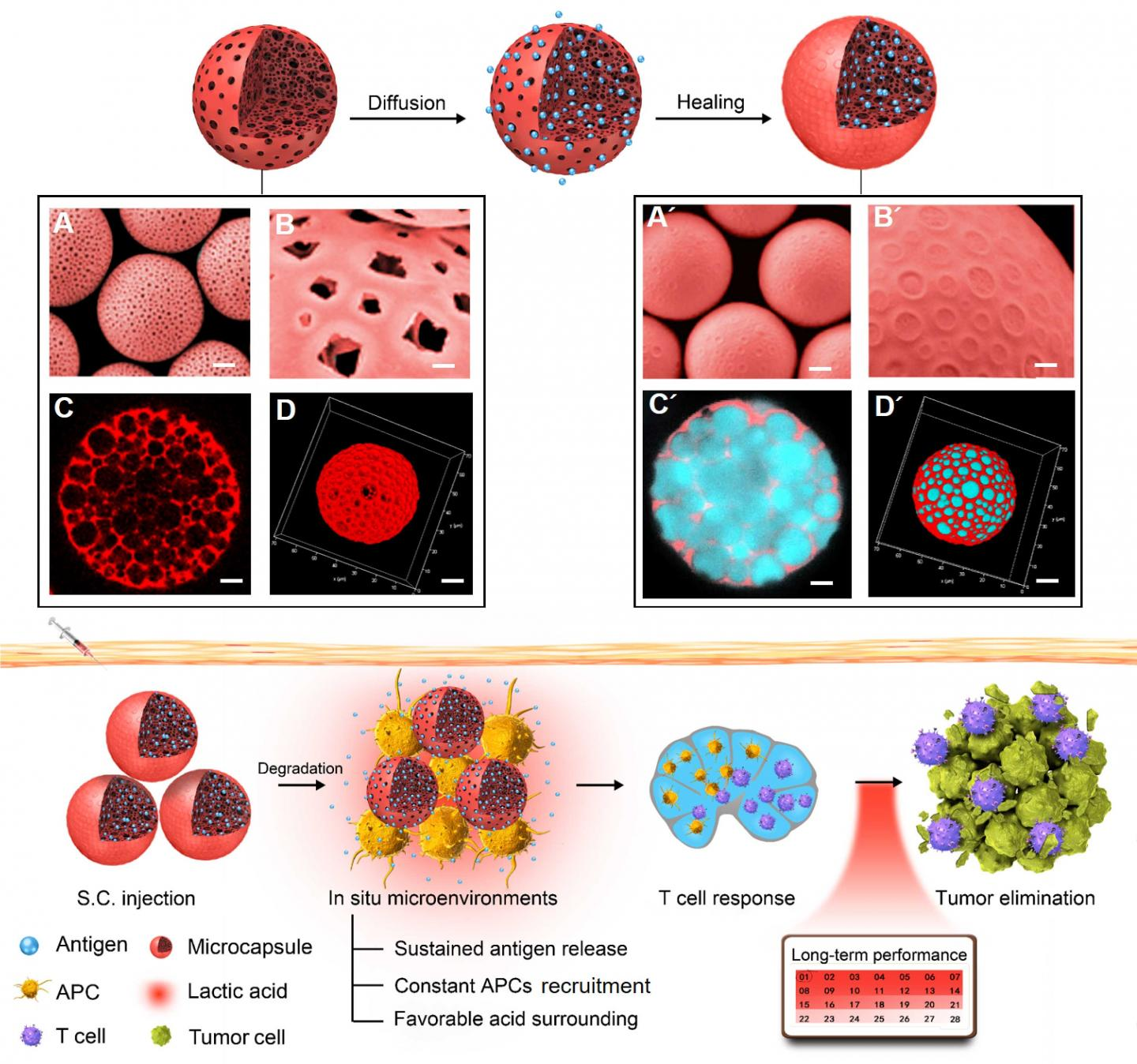 Strategy for Utilizing Self-Healing Microcapsules to Modulate Immunization Microenvironments in Canc