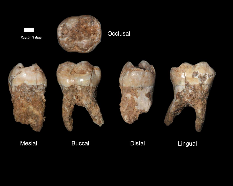 Teeth from Qesem Cave
