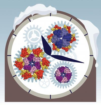 Operation of Ancient Biological Clock Uncovered by Making Time Stop