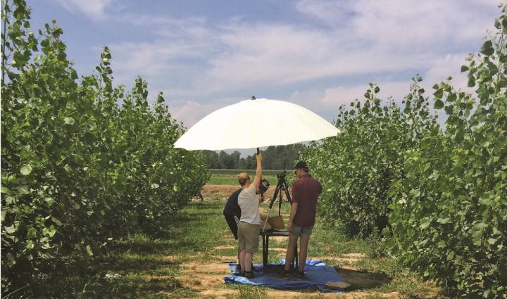 Grant to Develop Drought-Tolerant Poplars for Bioenergy (1 of 2)
