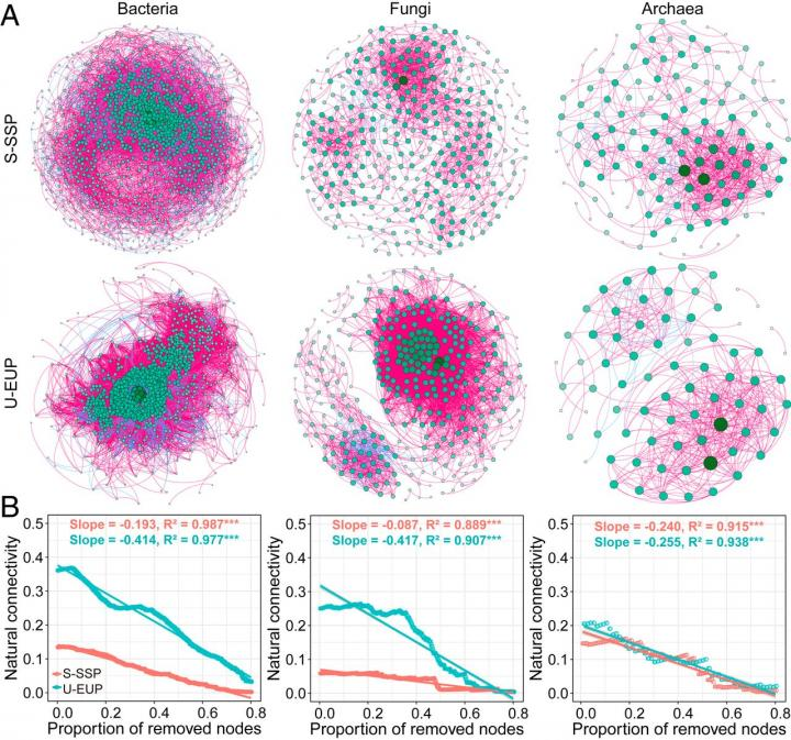 Co-occurrence networks (A) and robustness analysis (B) for microbial communities