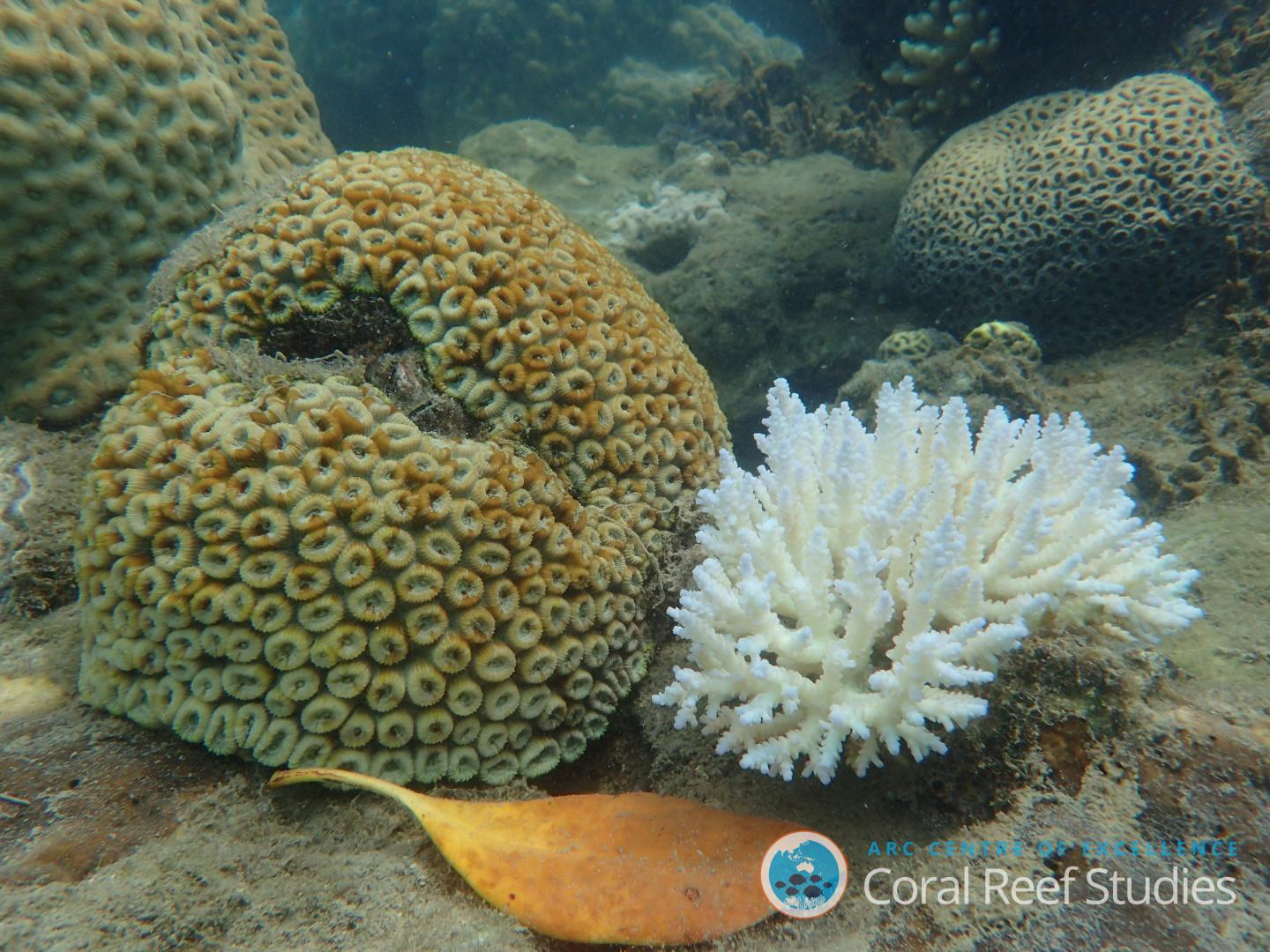 One of These Corals is Not Like the Others