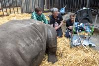 Oocytes Extraction from the Southern White Rhino Female