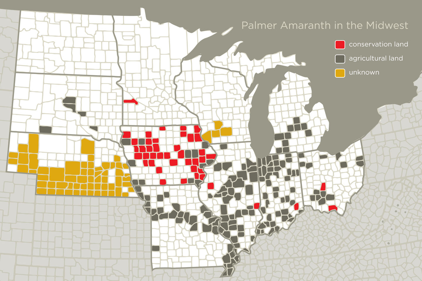 Bad Seeds Bring Palmer Amaranth to the Midwest