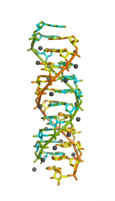 Rendering of the poly(rA)11 Double-Helical RNA