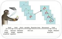 Novel Obstacle-Avoidance Task Designed to Disambiguate Third Movement Parameter
