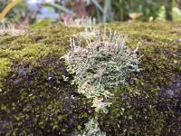 Lichens (2 of 2)