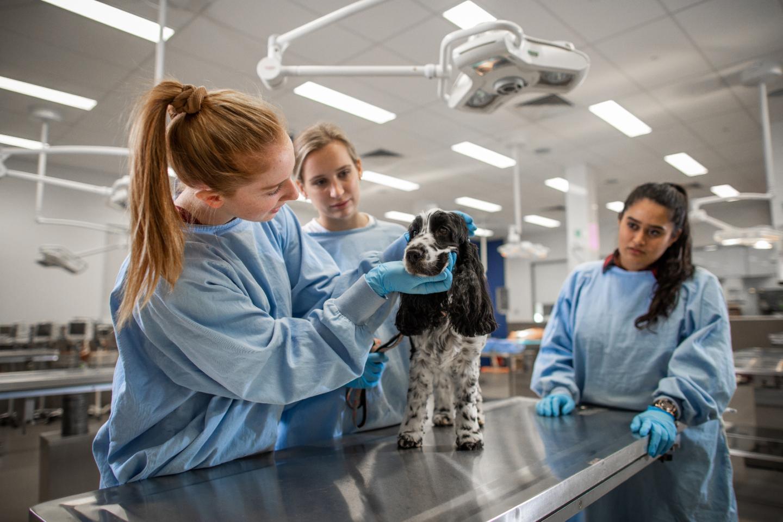 Uni of Adelaide Vet Scientists in Training