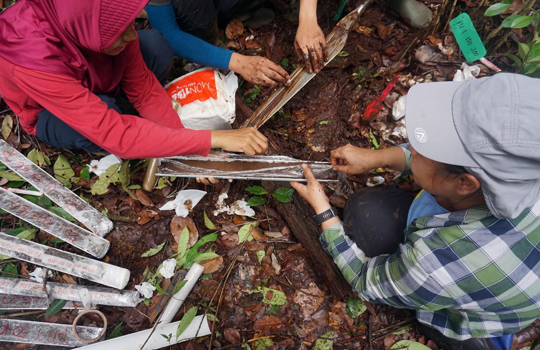 Borneo peat samples