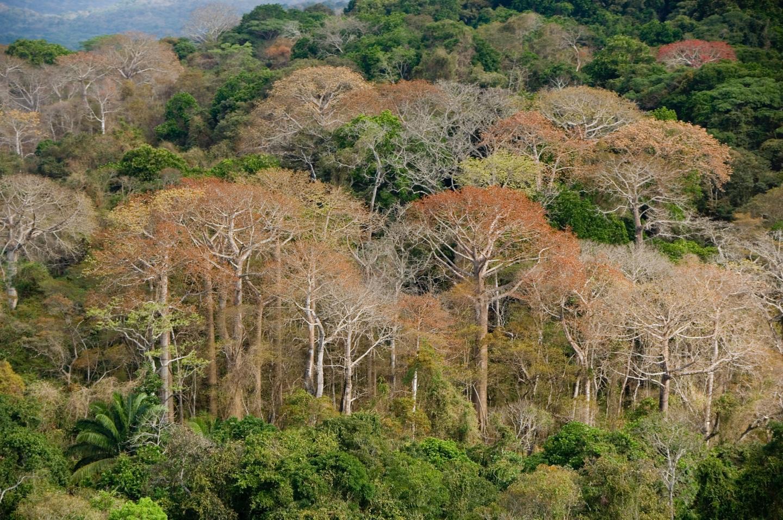 Dry Season Forest Panama