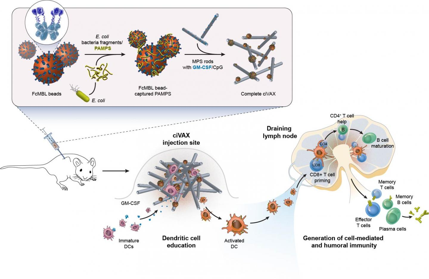 Biomaterials-based infection vaccines: how they are made and how they work