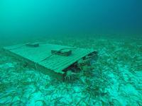 Caribbean Spiny Lobsters in Artificial Habitat