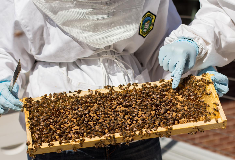 Bees at Georgia Tech