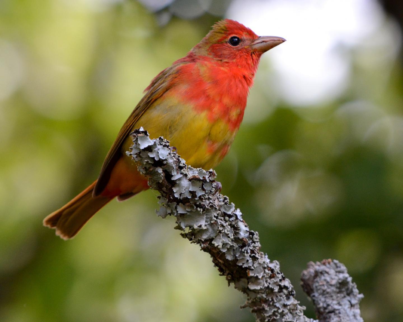 OU Study Uses Novel Data Sources to Demonstrate Seasonality of Bird Migration