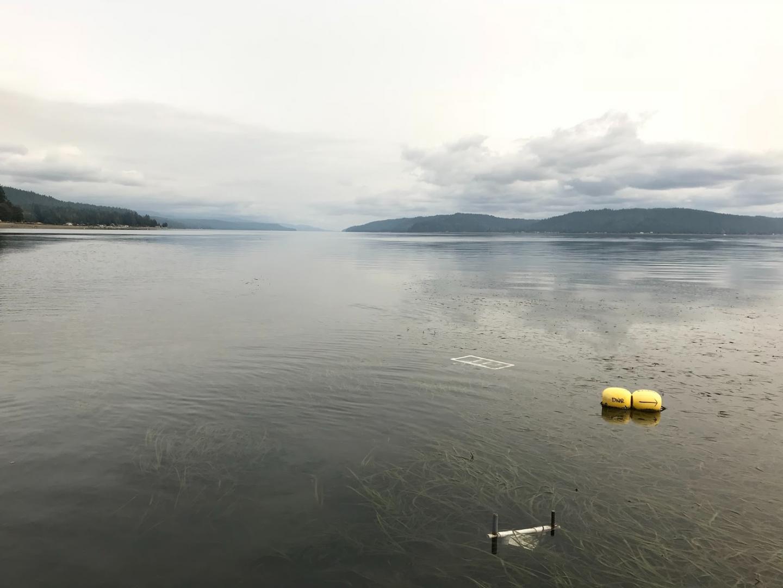 Puget Sound study site