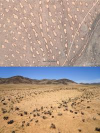 Researchers Get to the Bottom of Fairy Circles (3 of 3)