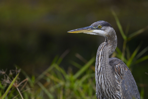 Most of iNaturalist's Top 10 Species Are Birds