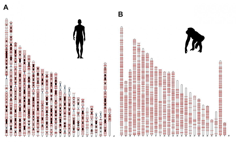 Salk Scientists Discover Protein Factories Hidden in Human Jumping Genes