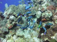 Caribbean Coral (1 of 2)