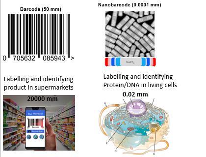 Nanoscopic barcodes set a new science limit