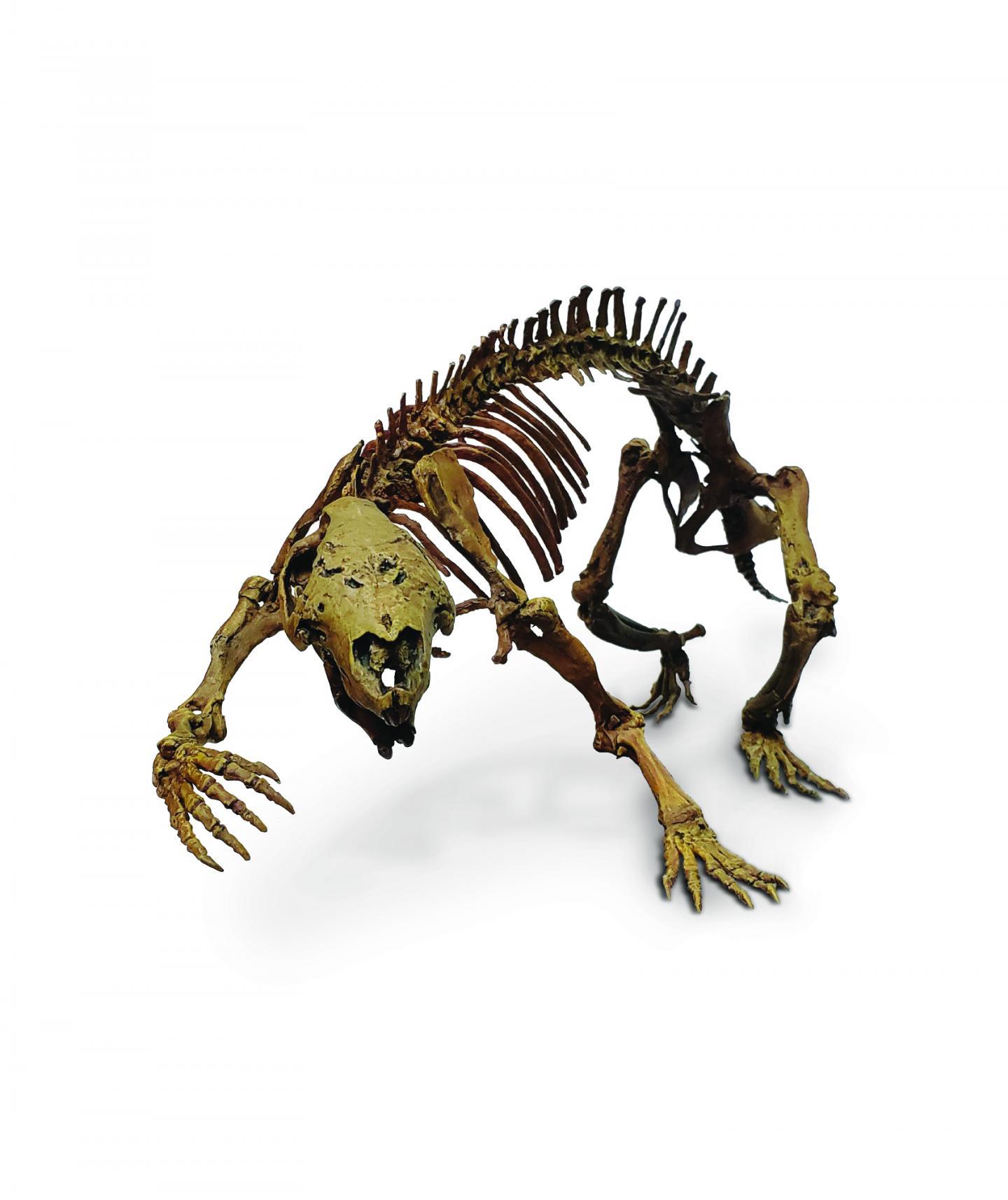 Adalatherium fossils