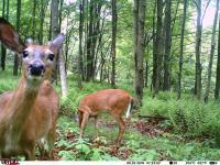 deer in camera