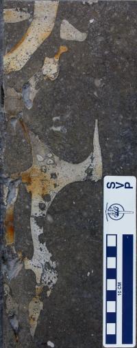 Prototherium, Society of Vertebrate Paleontology
