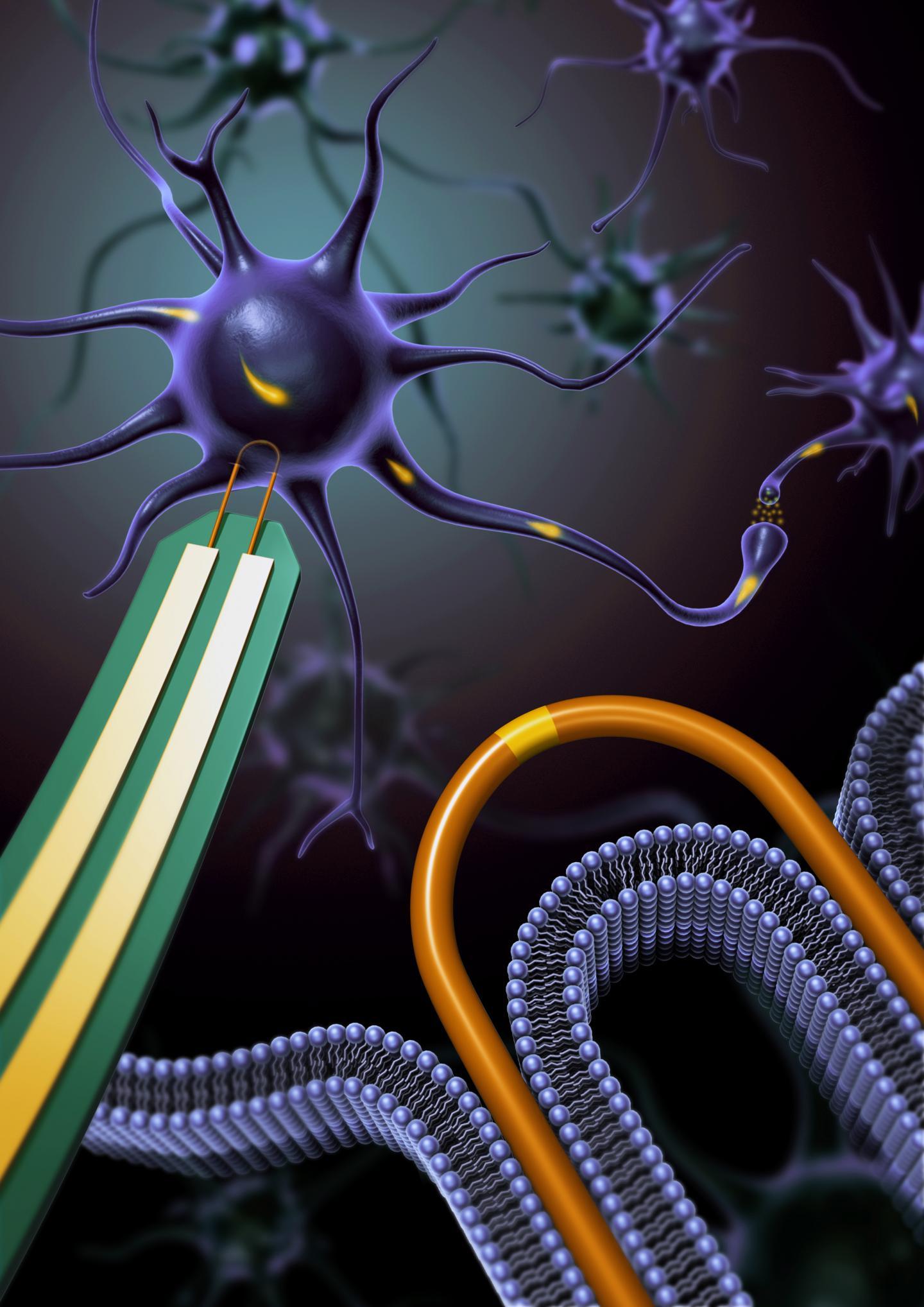 A U-Shaped Nanowire Pierces the Membrane of a Neuron