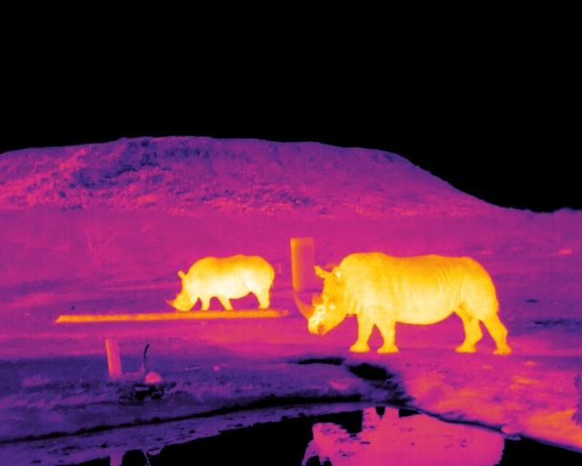 Infrared Image of Rhinos
