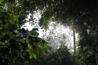 View from the Canopy Floor in the Cloud Forest Sanctuary, Xalapa, Mexico