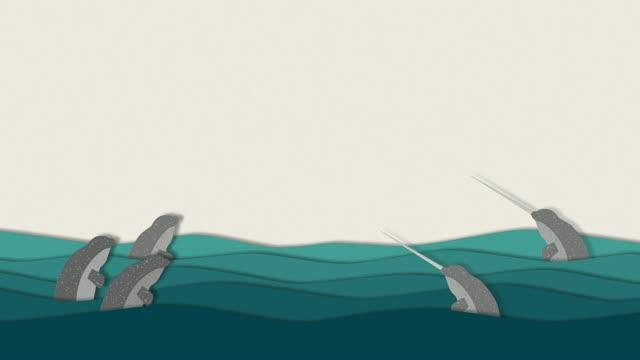 Narwhal Sexual Selection