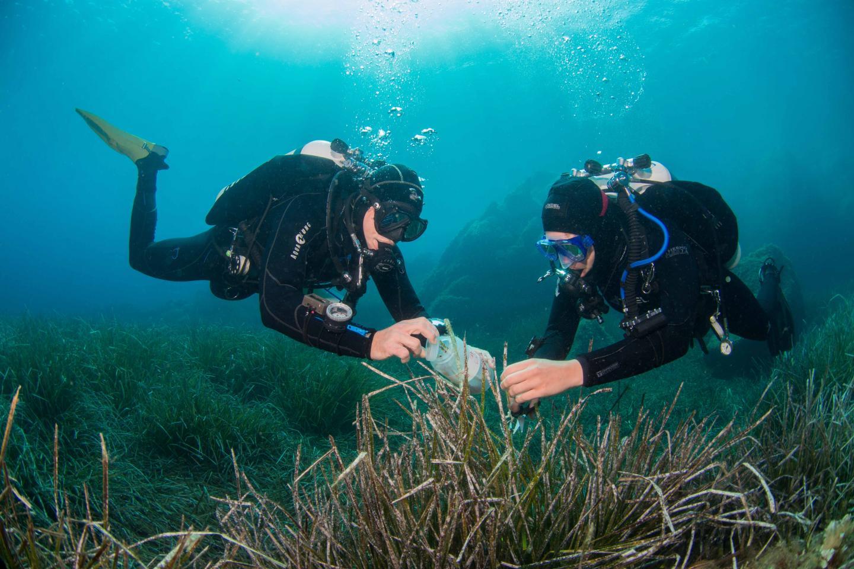 Divers Collect Sea Plants