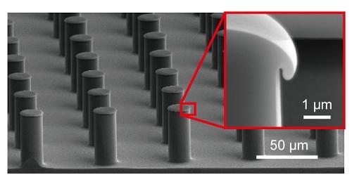 SEM Image of Mushroom-Shaped Structure