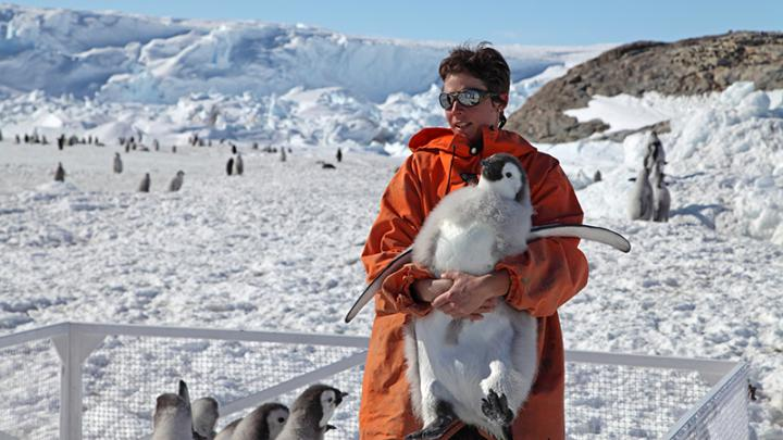 Stephanie Jenouvrier Holding Young Emperor Penguin