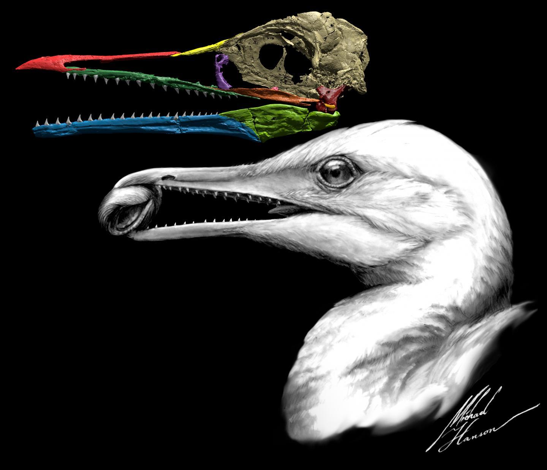 <i>Ichthyornis dispar</i>