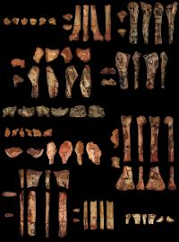 Preserved Bones of <I>Kryptodrakon progenitor</I>