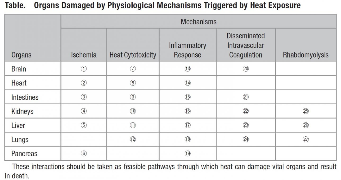 Table: Organs Damaged by Physiological Mechanisms Triggered by Heat Exposure