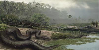 Giant Boine Snake