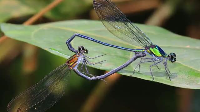 ESF Top 10 New Species for 2016