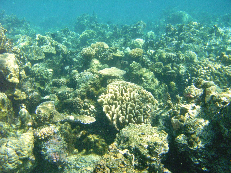 Coral Symbiosis