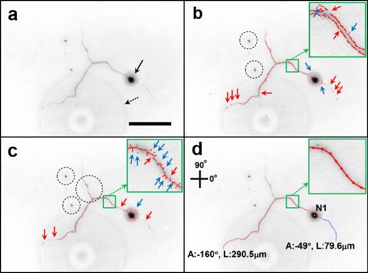 Neuron Image Analyzer