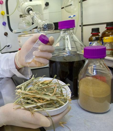 Ionic Liquids for Biofuels