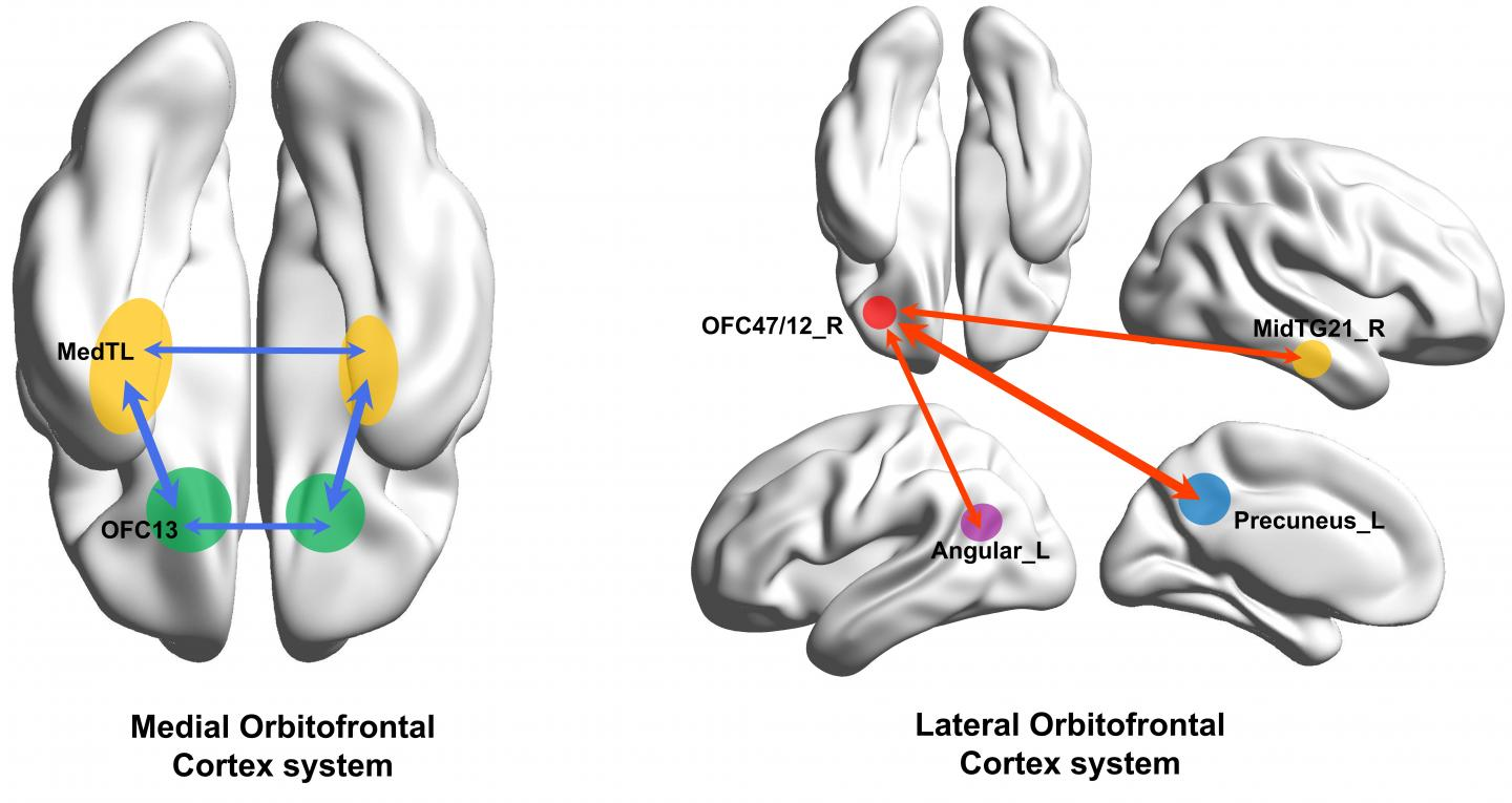 Diagram Showing Parts of the Brain Implicated in Depression