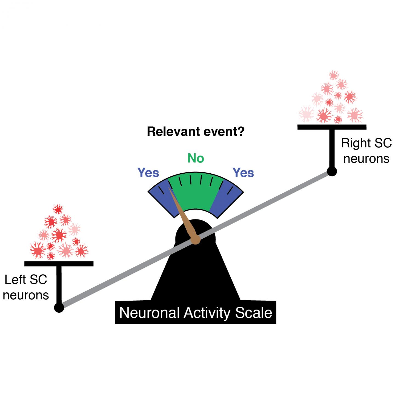 Neuronal Activity Scale