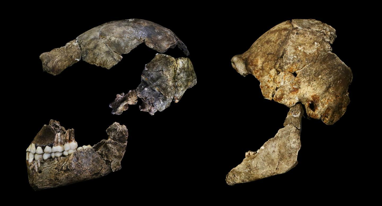 Humanlike Skulls