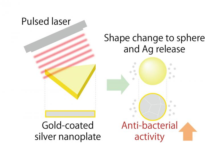 The Antibacterial Activity of Gold-Coated Silver Nanoplates
