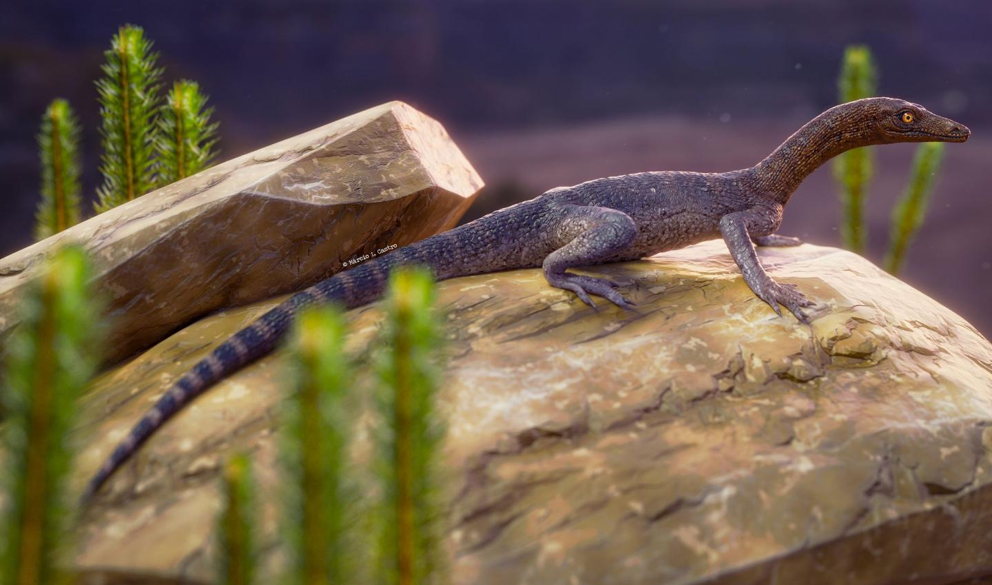 New fossil from Brazil hints at the origins of the mysterious tanystropheid reptiles