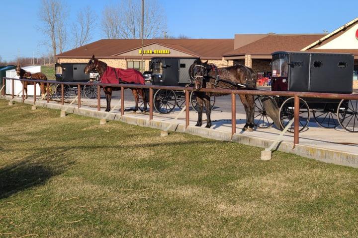 Amish buggies