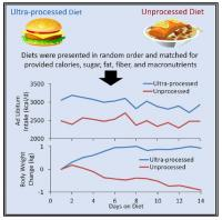 Processed Diets Graphical Abstract