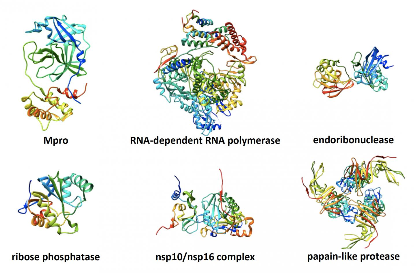 Gallery of Initial SARS-CoV-2 Nonstructural Proteins